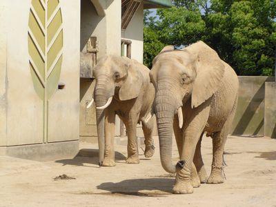 210509 動物園14
