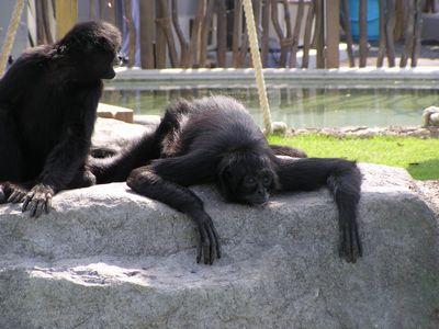 210509 動物園17