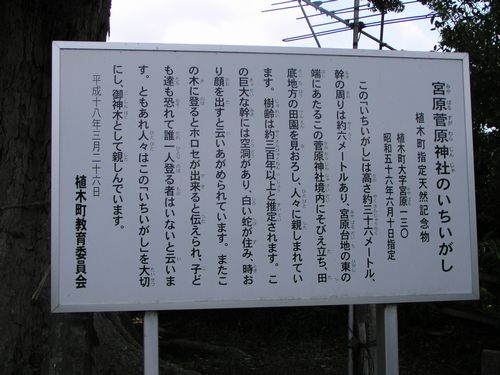 210606 宮原菅原神社カシ4