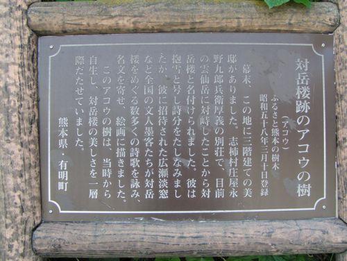 210620 対岳楼跡のアコウ2