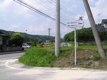 090704 坂の上神社のモミ1