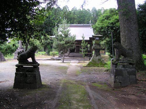 090704 坂の上神社のモミ2