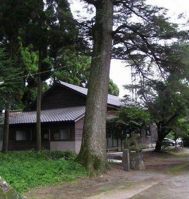 090704 坂の上神社のモミ4-3