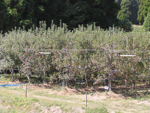 210926 高森アップル農園2