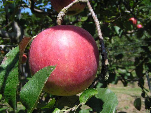 210926 高森アップル農園6