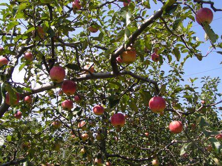 210926 高森アップル農園8