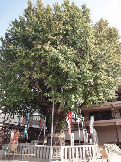 211017 櫛田神社10