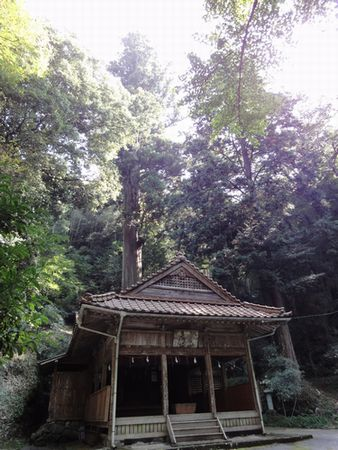211031 1諏訪神社大杉7