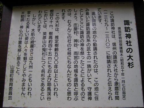 211031 1諏訪神社大杉1