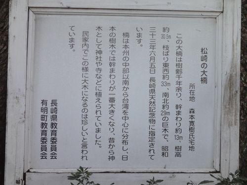 211224 松崎の大楠2