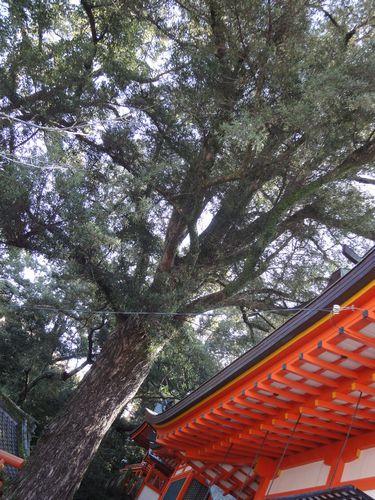 220220 若宮神社6