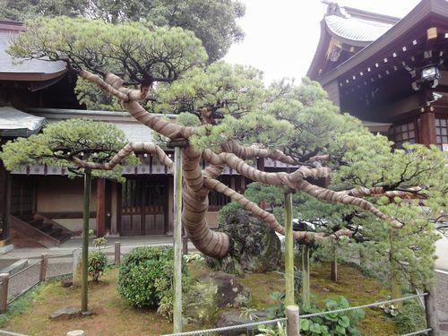 220313 出水神社6