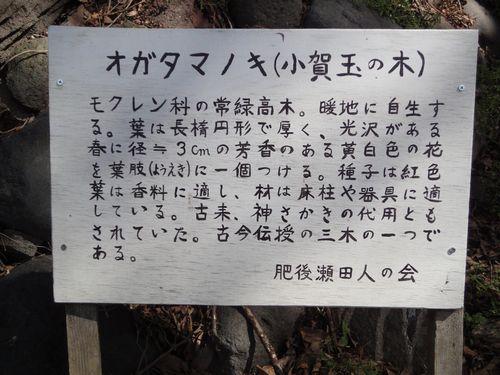 20100322 瀬田神社6