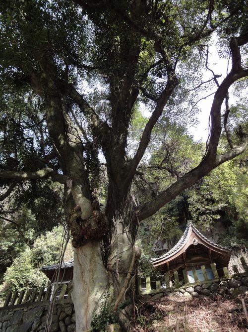 20100322 瀬田神社7