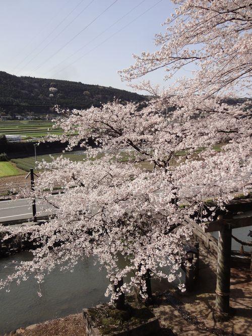 20100322 瀬田神社9
