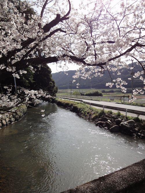 20100322 瀬田神社10