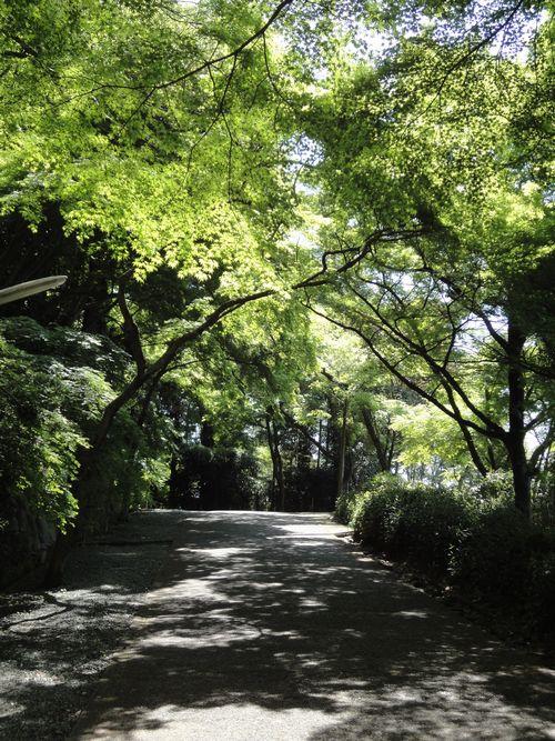 220417 日吉神社1
