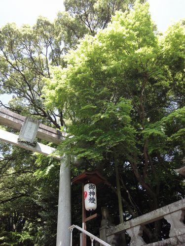 220417 日吉神社2