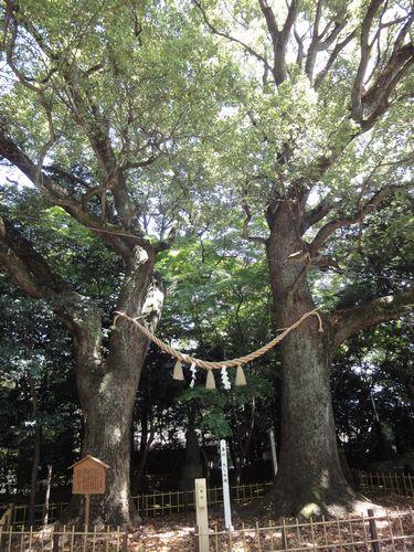 220417 日吉神社4