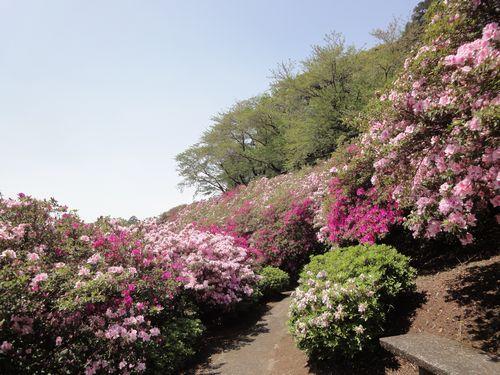 220417 日吉神社7