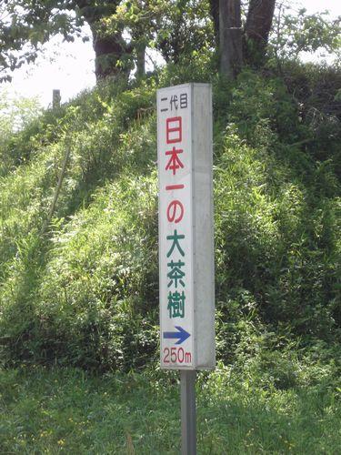 220429 日本一茶樹1