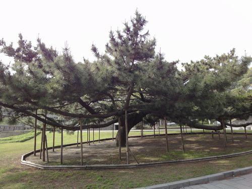 220430 石橋記念公園22
