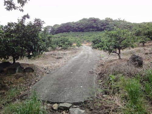 220522 みかん畑