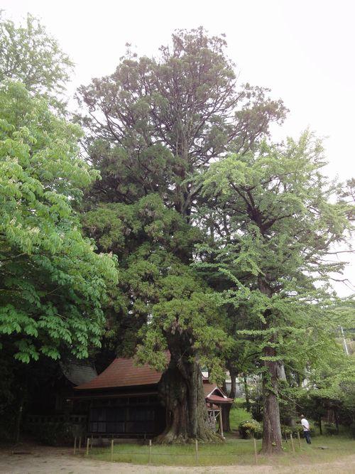 220529 平川神社2