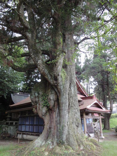 220529 平川神社3-1