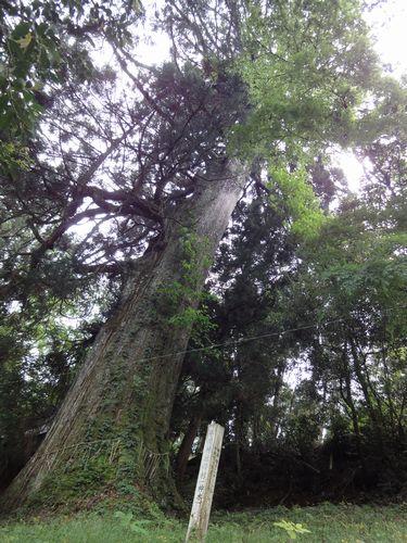 220529 平川神社5