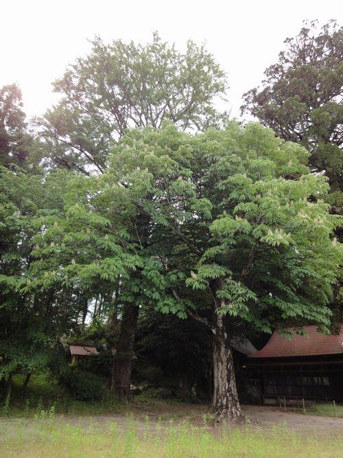 220529 平川神社7-1