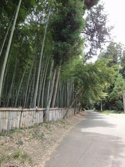 220612 小木阿蘇神社8