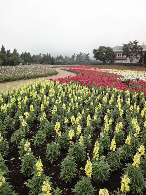 220624 くじゅう花公園12