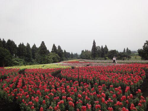 220624 くじゅう花公園11