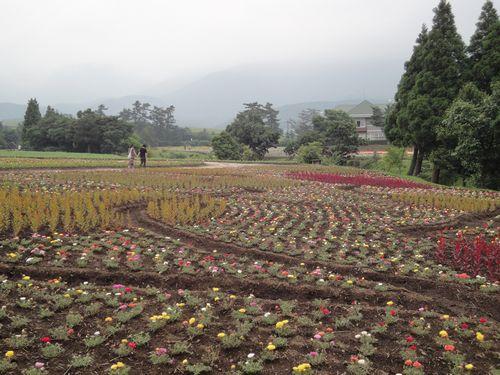 220624 くじゅう花公園7