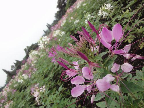 220624 くじゅう花公園14