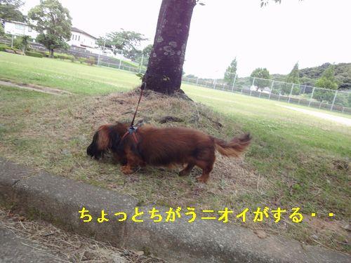 220612 柿原公園2