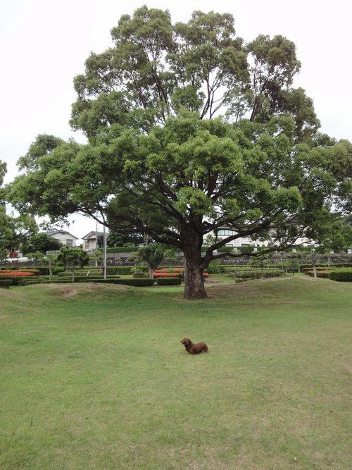 220612 柿原公園11