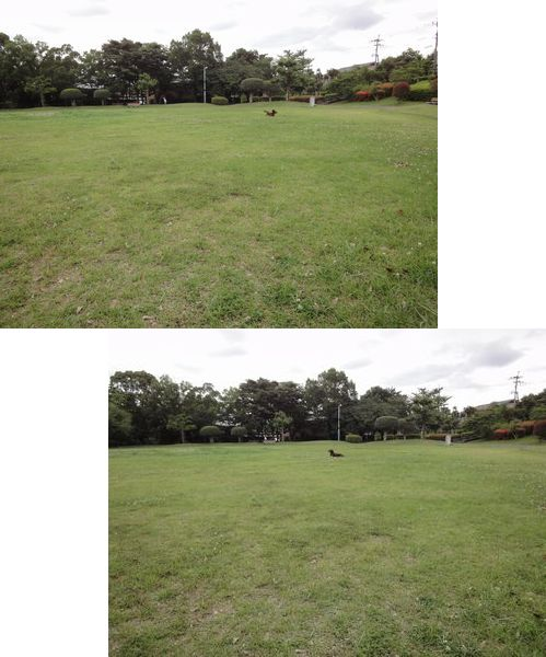 220612 柿原公園6-1