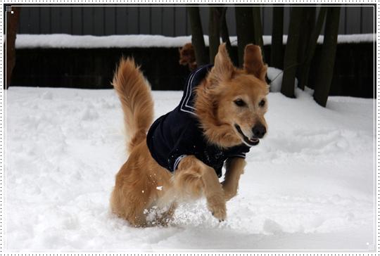 2010,1,15雪遊び4