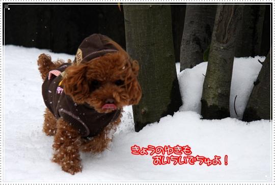 2010,1,15雪遊び3