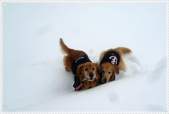 2010,1,15雪遊び11