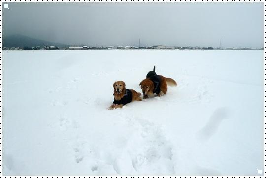2010,1,15雪遊び17