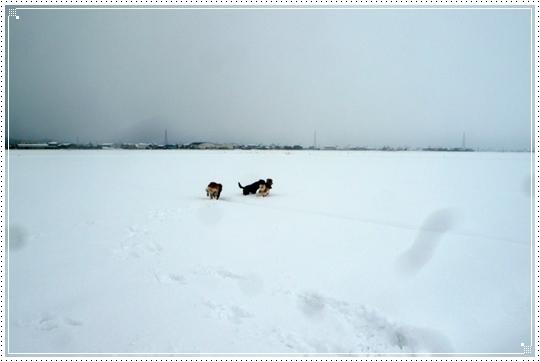 2010,1,15雪遊び10