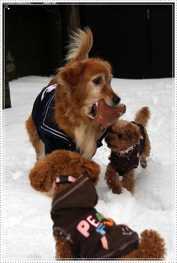 2010,1,15雪遊び8