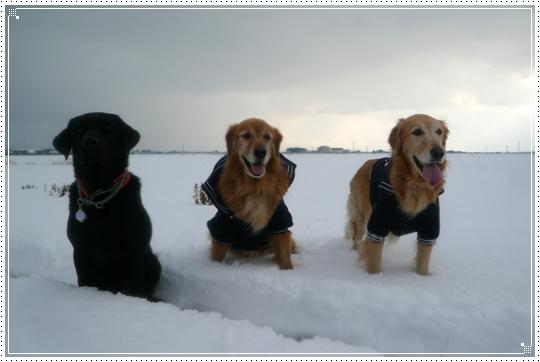 2010,1,15雪遊び12