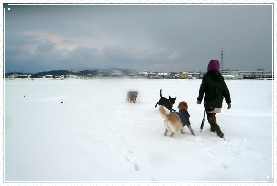 2010,1,15雪遊び16