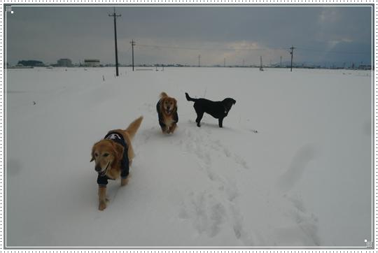 2010,1,15雪遊び14