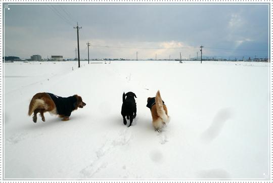 2010,1,15雪遊び13