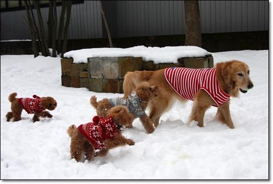 2010,1,16雪遊び5